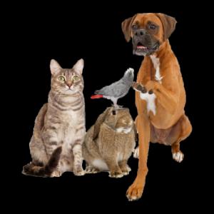 Honden – Katten – Konijnen – Vogels